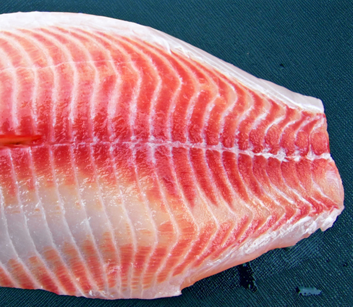 Red Select Tilapia ™